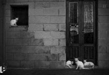 piazza gatti francavilla fontana