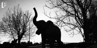 Circo Petrolio animali elefante