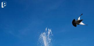 Francavilla fontana piazza umberto I piccione